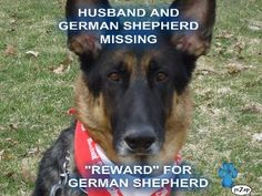 Bring back the German Sheppard please you can keep the husband LOL.