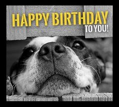 Happy Birthday Memes with Funny Cats, Dogs and Animals - - Happy Birthday Memes with Funny Cats, Dogs and Animals # Birthday Wishes Guru # Funny Dog Birthday Meme: Alles Gute zum Geburtstag Dog Birthday Wishes, Birthday Meme Dog, Happy Birthday Funny, Happy Birthday Messages, Happy Birthday Quotes, Happy Birthday Images, Happy Birthday Greetings, Animal Birthday, Happy Birthday Animals