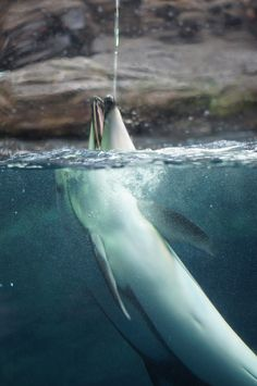 Water Play by Marthe: Dolphin at the Osaka Aquarium #Photography #Dolphin #Marthe #Osaka_Aquarium