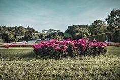 "NATI 📸 VIENNA auf Instagram: ""#topviennaphoto #amazingview #viennacity #viennagoforit #weloveaustria #wonderlustvienna #perspective #streetstyle #wienmalanders…"" Vienna, Austria, Perspective, Vineyard, Street Style, Photo And Video, City, Amazing, Plants"