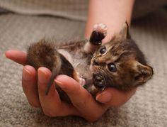 Precious handful.