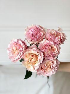 Garden roses !
