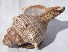 How to Make a Seashell Votive Candle: Seashell Crafts    This is super awesome and has step by step instructions.