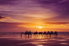 Camels at Sunset by Josh Janssen Australia Beach, Visit Australia, Western Australia, Broome Australia, Beautiful Places In The World, Places Around The World, Janssen, World Photo, Beaches In The World