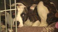 Cash reward offered for information after dog found shot, hog... | www.wsoctv.com