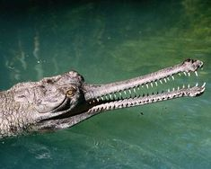 Take a look at our list of 10 scary animals that, oddly enough, are perfectly harmless.