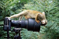 Very interested monkey on a photo camera