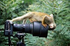 Very interested monkey on a photo camera