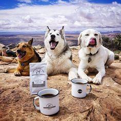 Ulkona. Perillä. - dog-nature-photography-loki-wolfdog-kelly-lund-33