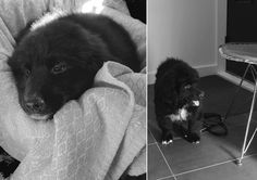 DAY 1, from MIRA to our home. (About 9 weeks old)