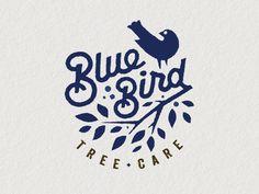 Bluebird 1 alt by Mike Bruner