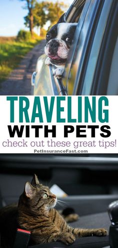 Check out these great tips on traveling with pets! You'll be traveling with your dog or cat in no time. Check out these great tips on traveling with pets! You'll be traveling with your dog or cat in no time. Pet Care Tips, Dog Care, Road Trip With Dog, Dog Health Tips, Healthy Pets, Cat Behavior, Dog Travel, Dog Boarding, Dog Training Tips