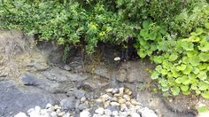 Beplanting bij natuurlijk water stroom, Frankrijk
