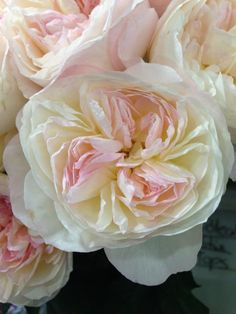Keira garden rose. Go visit your florist or order them online @ http://www.parfumflowercompany.com/