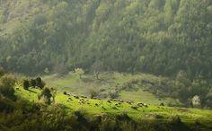 Bulgaria, The Rhodopes Mountain