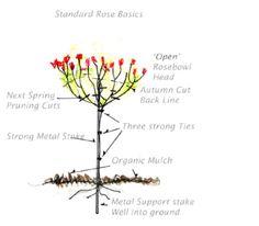 Rose Tree Pruning