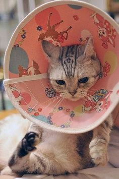 A cat wearing a pink cone around its head.