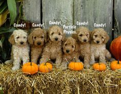 5 Out of 6 Puppies Agree, Halloween is all about the candy!