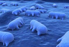 AIRLIFE te informa. ¿cuántos Tipos de Parásitos que afecten a los seres vivos hay? Existen formas parásitas en muchos grupos biológicos. Entre ellos están: Los virus, que son parásitos obligados, Las bacterias, Los hongos, Las plantas Los protistas, por ejemplo los apicomplejos o algunas algas rojas.