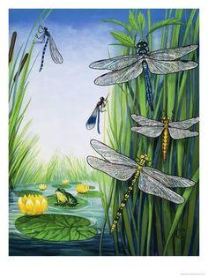 Dragonflies Giclee Print at Art.com