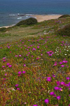 Costa Verde Spring, Sardinia, Italy