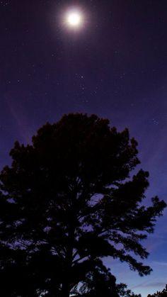 One Star Shine Night Dark Blue Sky Wood #iPhone #6 #plus #wallpaper
