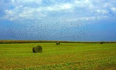 Field - Vrsac, Vojvodina