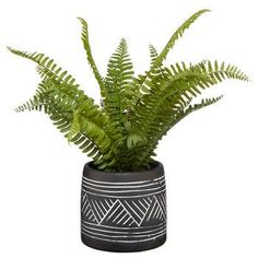 Two-Tone Ceramic Potted Fern Tropical Plants, Cactus Plants, Potted Ferns, Bouclair, Fall Collections, Staycation, Planting Succulents, Decoration, Greenery