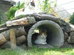 Katten tuin tunnel