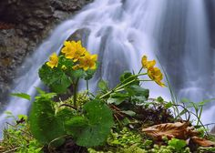 Spring at waterfall by *lica20 on deviantART