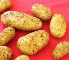 Αρχείο:Ποικιλία πατάτας Remarka.jpeg