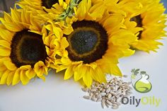 what is sunflower oil