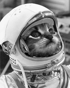 The USA sends monkeys into space, the USSR sends dogs, but the French they send a cat...could this be Felix the French cat launched into space found a stray in Paris launched and returned safe to live out its life in retirement..one can almost hear the La Mareillaise...