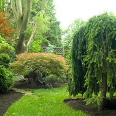 Create visual interest in your back yard by choosing unusual trees. Details: http://www.midwestliving.com/garden/ideas/30-beautiful-backyards/page/28/0