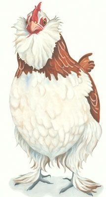 faverolle chicken painting print (Genevieve)...I love Lizzie Hall prints...she is so talented and they make me smile
