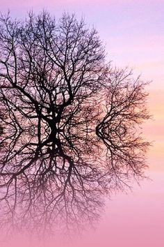 ✯ Angels Tree