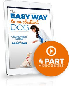 The Online Dog Trainer Blog by Doggy Dan