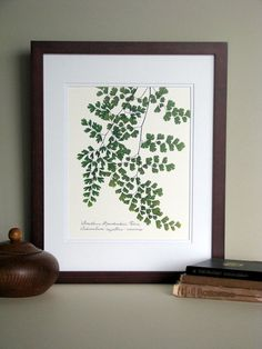 Pressed fern art print 11x14 double matted by FlatFlowerDesigns