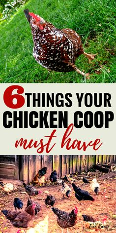 Chicken Coops: Give your hens everything they need. Make sure your chicken coop … Chicken Coops: Give your hens everything they need. Make sure your chicken coop has these 6 things for happy healthy hens! Cheap Chicken Coops, Small Chicken Coops, Chicken Coup, Portable Chicken Coop, Best Chicken Coop, Backyard Chicken Coops, Building A Chicken Coop, Chicken Runs, Chicken Lady