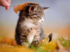 Streicheleinheiten mit Laub: Kleine Katze genießt – Bild: Shutterstock / ots-photo www.einfachtierisch.de