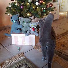 Dinosaur Stuffed Animal, Cat, Christmas Ornaments, Holiday Decor, Animals, Instagram, Animales, Animaux, Cat Breeds