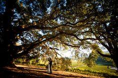 Kunde Winery wedding by Sonoma wedding photographer, Tinywater Photography