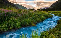 цветы, горы, колорадо, сша, река, закат
