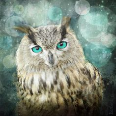 Wise old owl staring with piercing blue eyes ©Barbara Orenya this creature is made after a photography I digitally transformed and enhanced with textures and paint..Its an atmosphere filled with magic and mystery and the background is full of bubbles on this lovely starry night. This image is part of my new book le bestiaire enchante, the enchanted bestiary that you can browse some excerpts and buy here http://www.blurb.fr/books/5248539-le-bestiaire-enchante ^_^