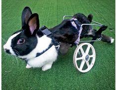 Revista Meu Pet - A revista que todo mês traz matérias incríveis para deixar seu bichinho saudável e feliz.<!--Coelho deficiente ganha cadeira de rodas Home OUTROS ANIMAIS -->