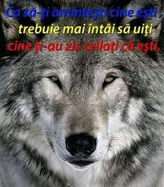 Husky, Dogs, Animals, Animais, Animales, Animaux, Doggies, Animal, Husky Dog