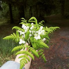 Oh the scent of lilyofthewalley in the nearby forest. #onebouquetperday #kukkakimppu #bouquetdefleurs #forest #flor #flower #fleur #fiori #blumen #blommor #kielo #saniainen @onebouquetperday