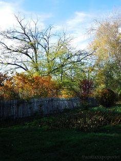 Walking Through November November, Autumn, Plants, Design, Art, November Born, Art Background, Fall Season, Kunst