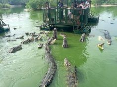 This dangerous park used to let you feed crocodiles