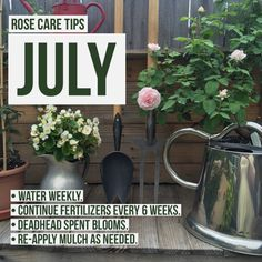 July in the Rose Garden